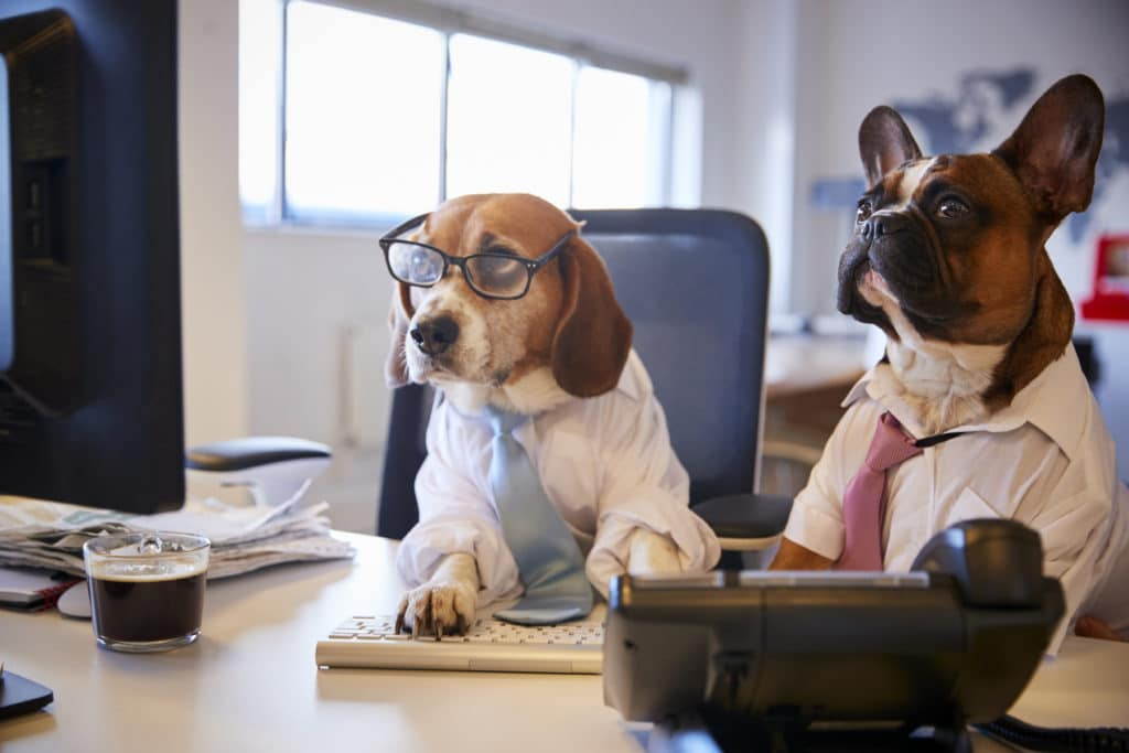 [Dog dressed as business person, sitting at desk]